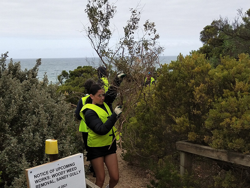 Students cleaning up dead plants from the sand dunes